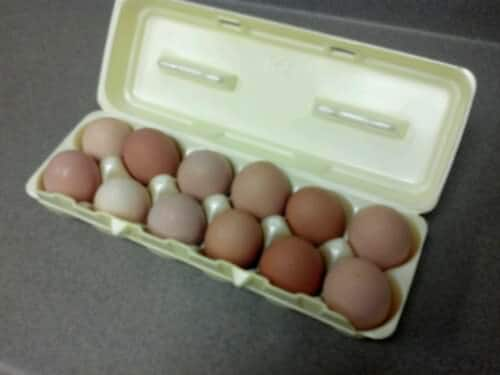 One of the nurses brought me fresh eggs laid by her chickens